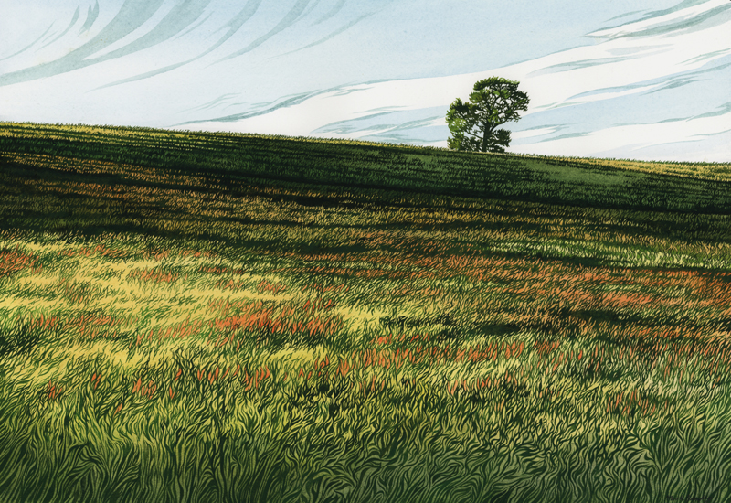 'Setting Light on Barley' - Watercolour by Mark Langley Fine Artist - 48 x 33 cm. At Fourwalls Gallery, Melton Mowbray.