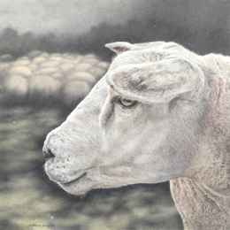 Buy a limited edition Giclée print by Mark Langley Animal Artist