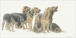 Buy a Giclée print by Mark Langley Animal Artist